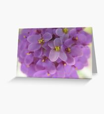 Giggling Mauves Greeting Card