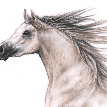 Arabian Stallion by ArtsandDogs