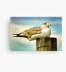 Seagull I  /  South Carolina Canvas Print