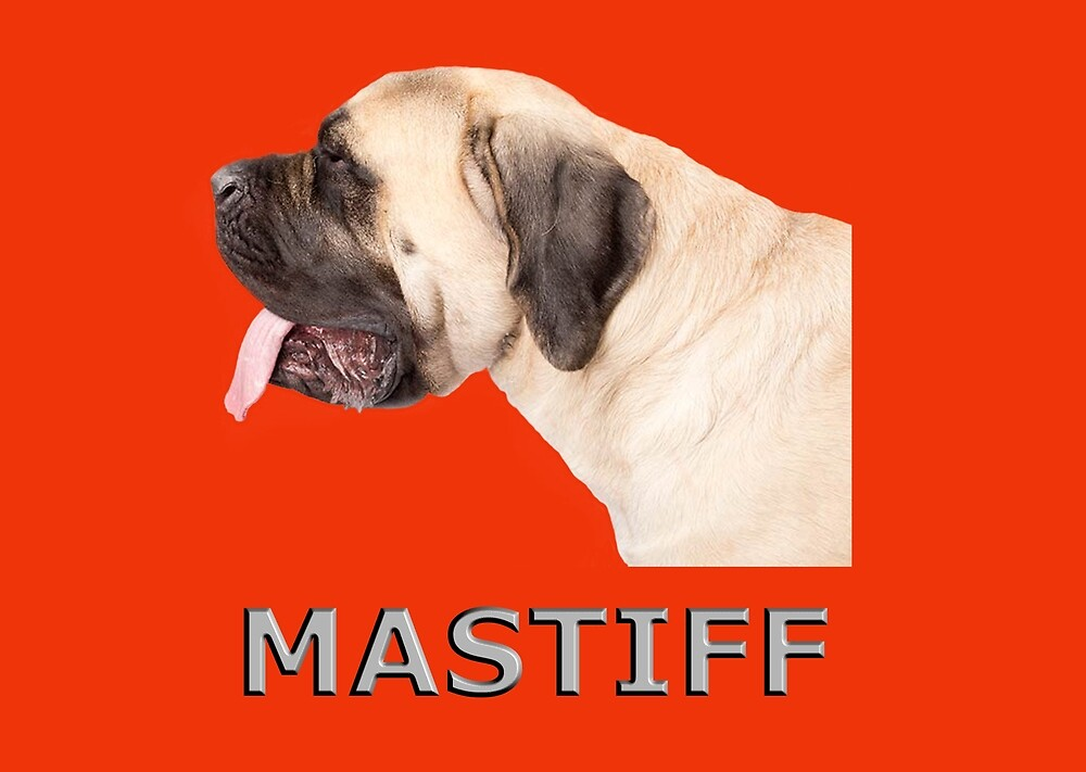 Mastiff Dog by rsparksa