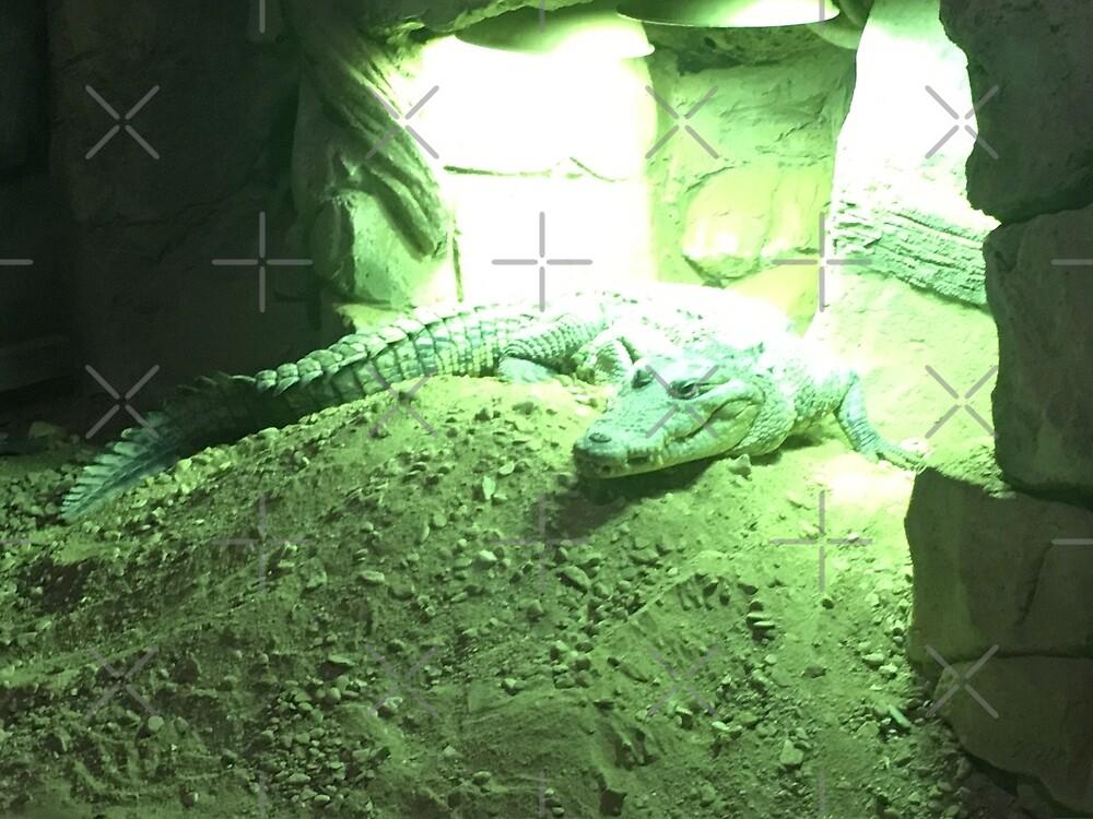 Crocodile  by DinkyDD