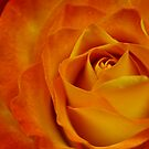 Beautiful swirls of color by alina98