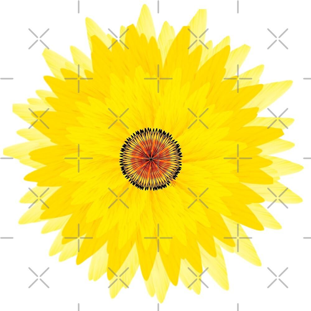 The sunflower  by nicaa