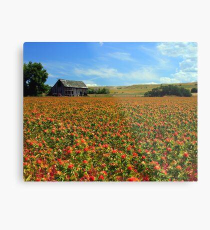 Field Of Color Metal Print