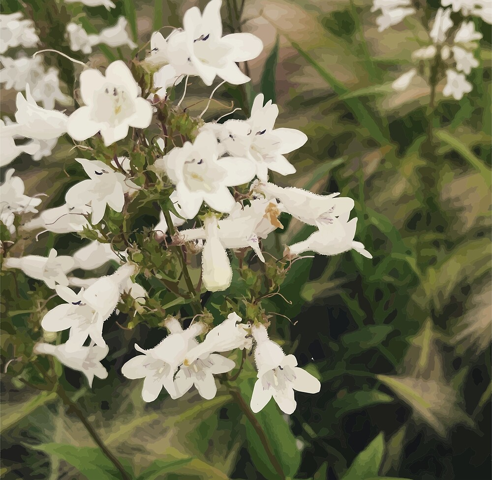 White Flowers by ChiTownMaps