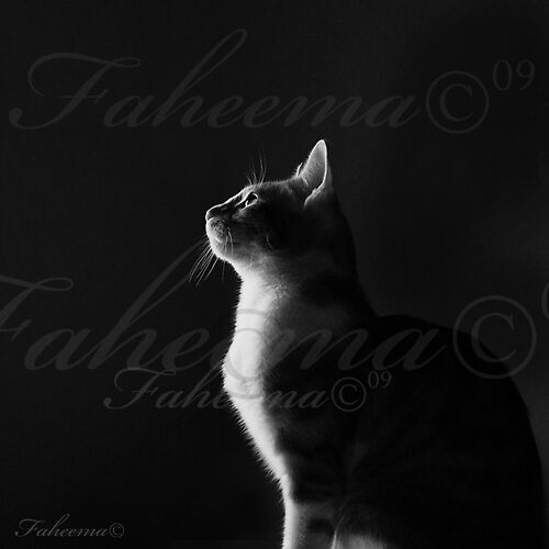 My Kitten by Faheema Patel