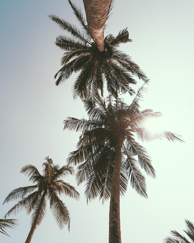 Palm Tree by rlafranco