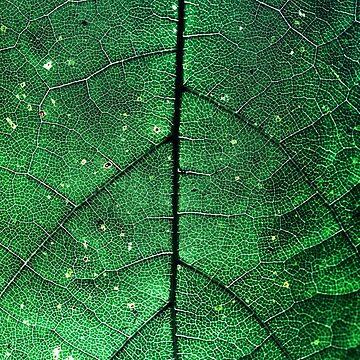 Detailed Leaf Close-Up by Grathicks