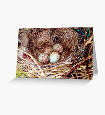 Bird eggs in a nest Greeting Card