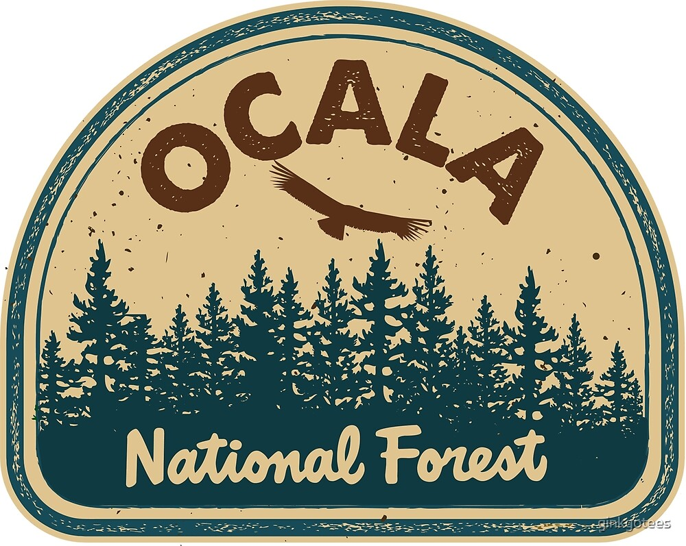 Ocala National Forest by ginkgotees
