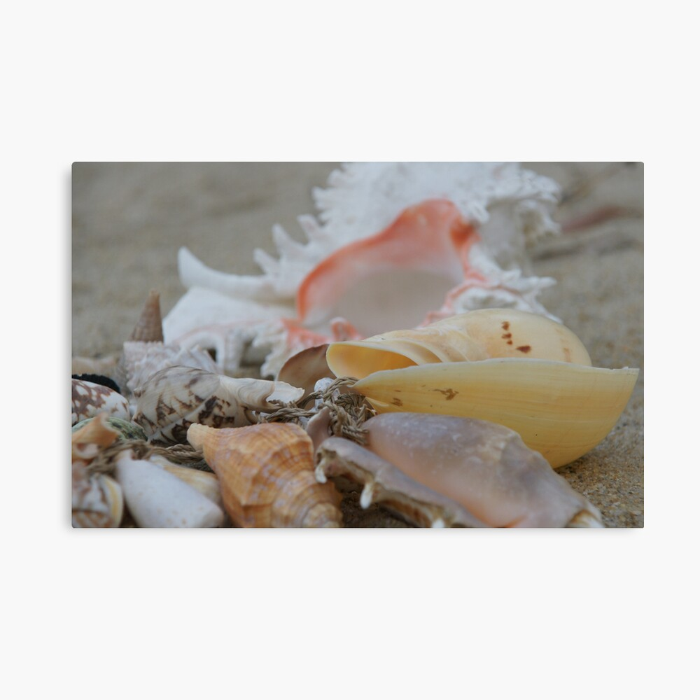 Pearly Shells Canvas Print