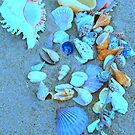 50 Shells at Clifton Beach, Far North Queensland. by Caroline Angell