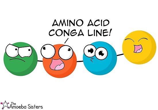 Amino Acid Conga Line by amoebasisters