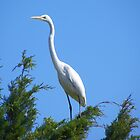 Great White Egret by MaryinMaine