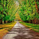 A Road Through Autumn by wallarooimages