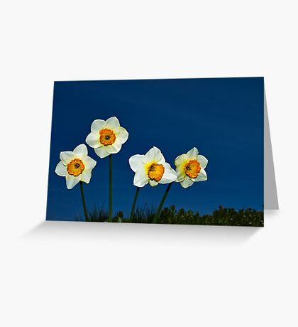 The Deadly Daffodils - Brighton - England Greeting Card