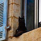 Black Cat on a Window Ledge by Buckwhite