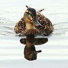 Double duck by Alan Mattison