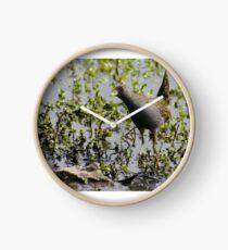 Australian Spotted Crake Clock