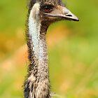 Old Man Emu by CBoyle