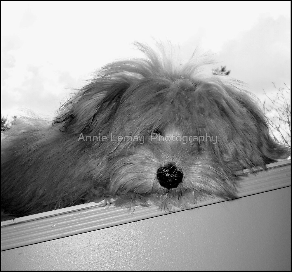 Dog Day Afternoon by Annie Lemay  Photography