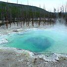 Yellowstone Geyser by Braedene