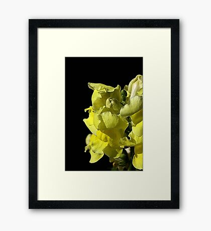Snapdragon - Yellow Framed Print