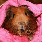 Sebastian's Bathtime in the Pink  by AnnDixon