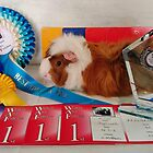 One of Our Prize Winner's at THE ROYAL WELSH Show by AnnDixon