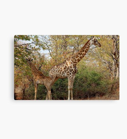 BACK TO BACK, MOTHER AND CHILD IN THE WILD ! Canvas Print
