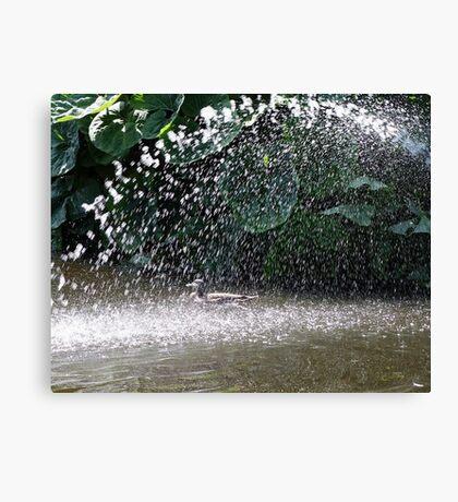 Showerbath Canvas Print