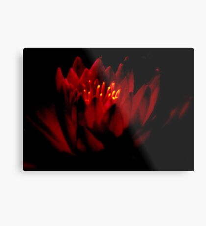 THE   WARM GLOW  OF A   WATER  LILY    Metal Print