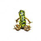 Tiny Poison Dart Frog, Bocas Del Toro, Panama by Al Bourassa