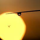 Morning Flight by dougbphotos