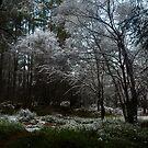 snow scene, rowantree woods by codaimages