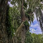 Deerhead Oak Tree, Fairyland Fern Forest, Georgetown South Carolina, Tree Photography, Nature Photo, Magical Tree, Spanish Moss, Nature Photography, Ferns by Cindi Hardwicke
