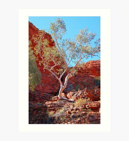 Ghost Gum, Kings Canyon, Northern Territory, Australia Art Print