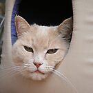 Hi Mom - I'm in my little basket all comfy by Karen Kaleta