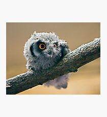Bright Eyes Photographic Print