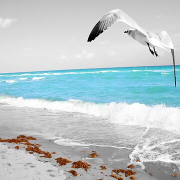 Seagull in Flight by ychirinos