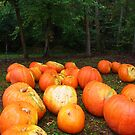 Pumpkins in the Woods by gcampbell
