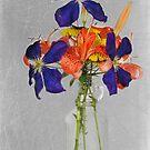 Bottled Beauty by Maria Dryfhout