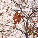 Red Leaves In Fog by ©Dawne M. Dunton