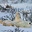 Yoga Bear plank arm up by Owed To Nature