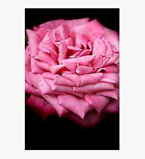 Pink Rapture Photographic Print