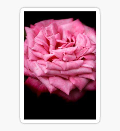 Pink Rapture Sticker