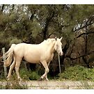 White Horse of the Camargue by Vic Potter