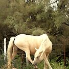 White Horse of the Camargue II by Vic Potter