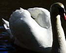white swan by tego53