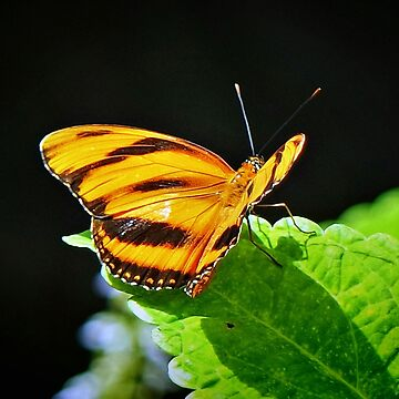 Butterfly Of Summer by RickDavis